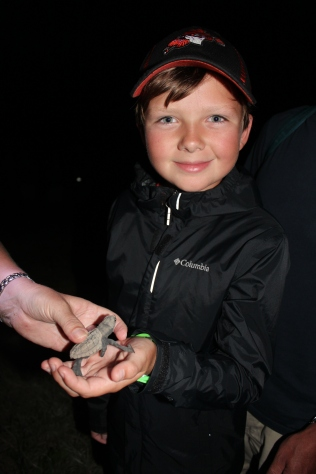 We watched over 150 of these little guys hatch from their nest and make their way to the ocean.