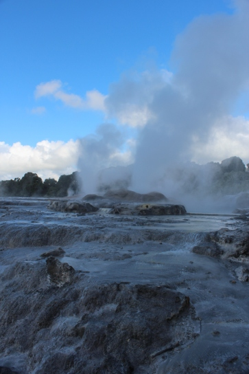 One of the geysers in Te Puia